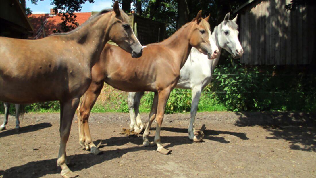 CAV Verwahrloste Pferde 2