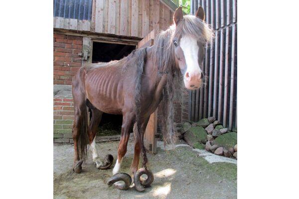 CAV Verwahrloste Pferde 3