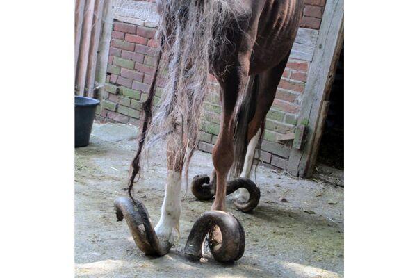 CAV Verwahrloste Pferde 5