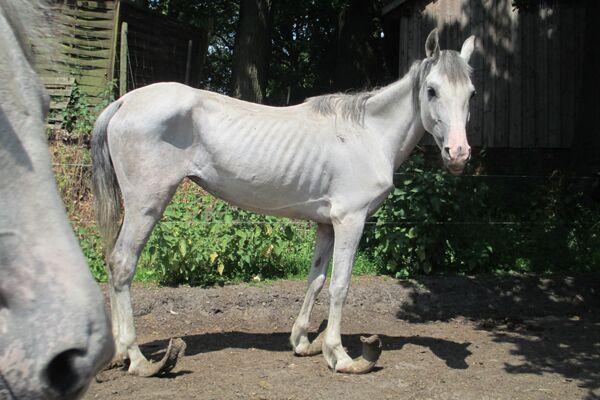 CAV Verwahrloste Pferde 6