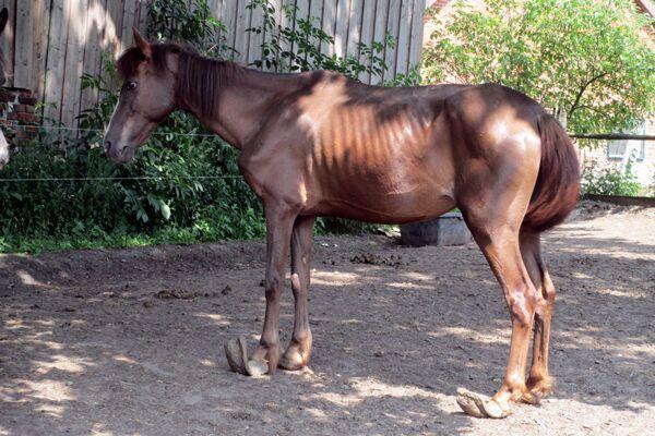 CAV Verwahrloste Pferde 8