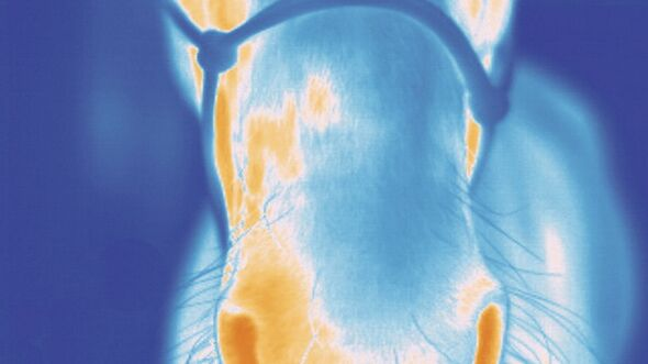 CAV Veterinärmedizinische Thermografie