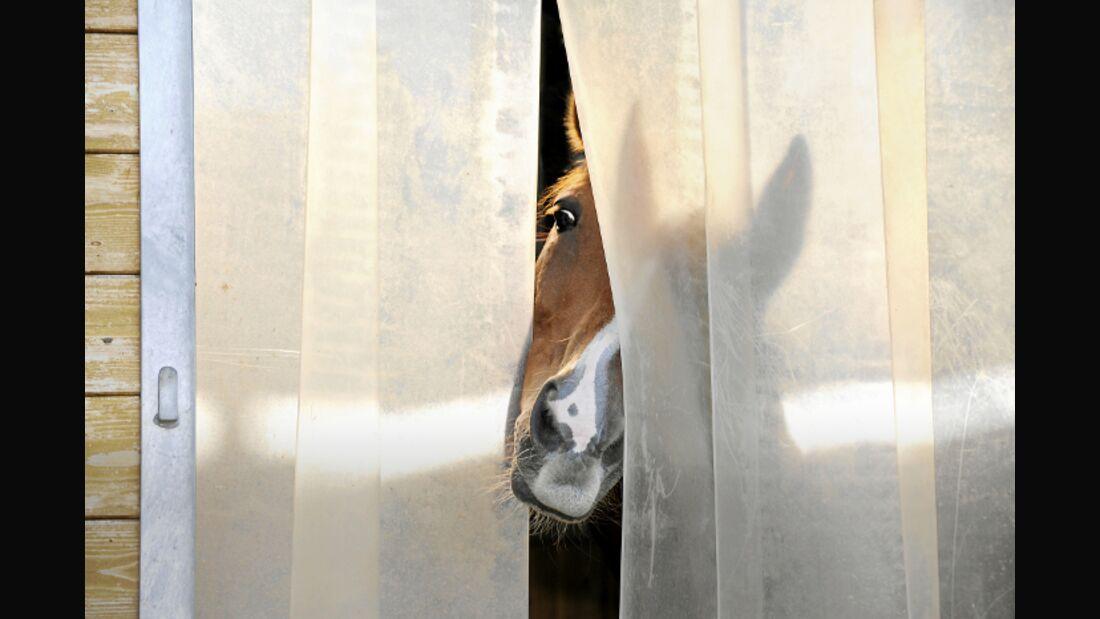 CAV Vorhänge Lamellen Pferd Fuchs Kopf Box