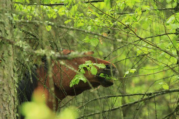 CAV Waldpferde 10