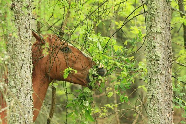 CAV Waldpferde 11