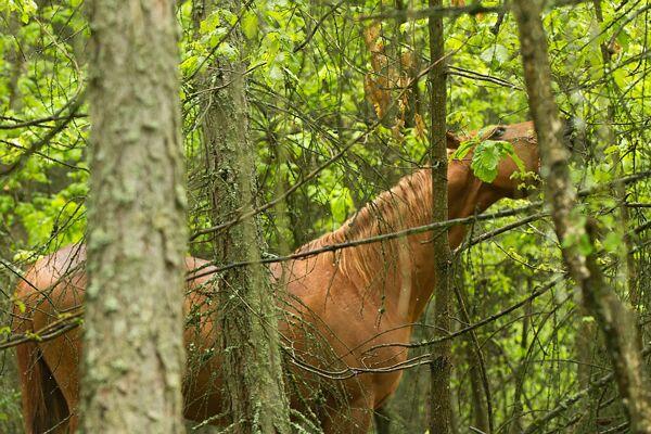 CAV Waldpferde 13