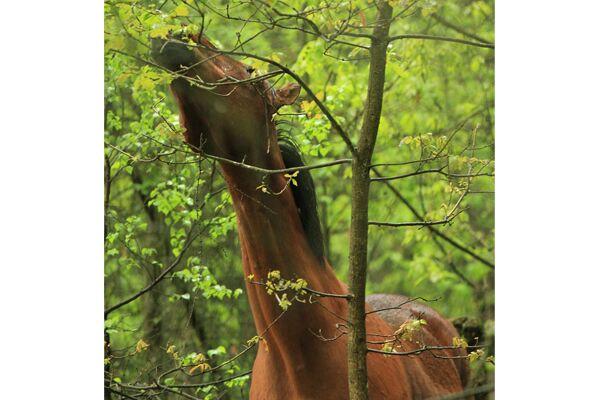 CAV Waldpferde 9