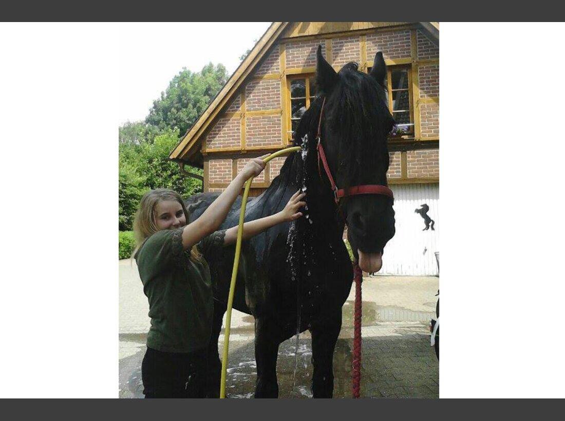 CAV Wasser Pferde Baden Leserfotos NI NA