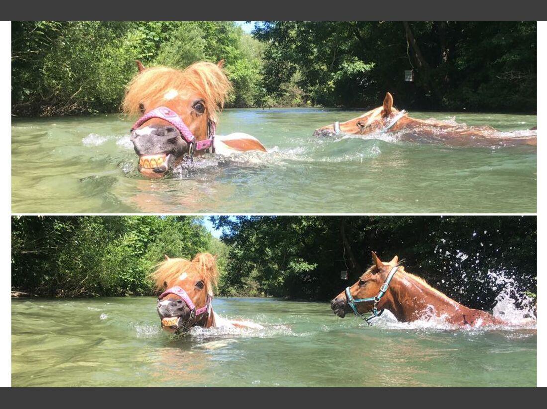CAV Wasser Pferde baden Julia Weber