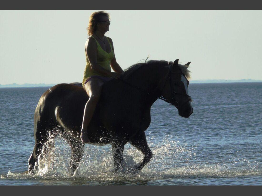 CAV Wasser Pferde baden Kathrin Krüger