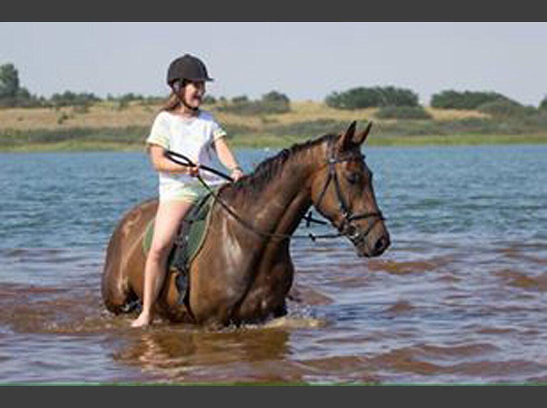 CAV Wasser Pferde baden Lea