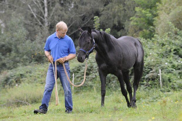 CAV Wasser Wasser-Training Stefan Valentin Horsemanship_01
