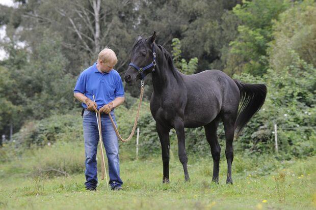CAV Wasser Wasser-Training Stefan Valentin Horsemanship_02