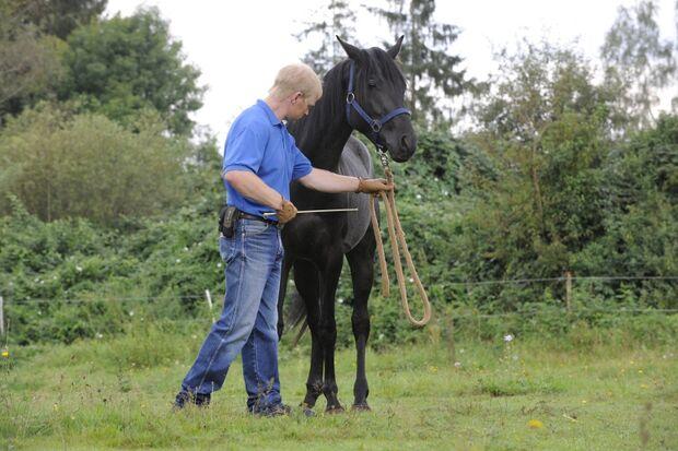 CAV Wasser Wasser-Training Stefan Valentin Horsemanship_04