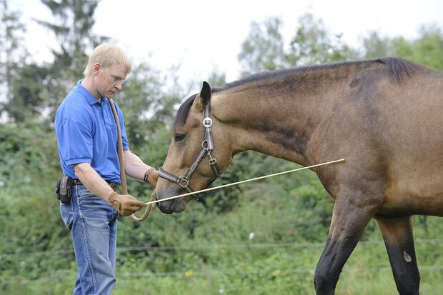 CAV Wasser Wasser-Training Stefan Valentin Horsemanship_06