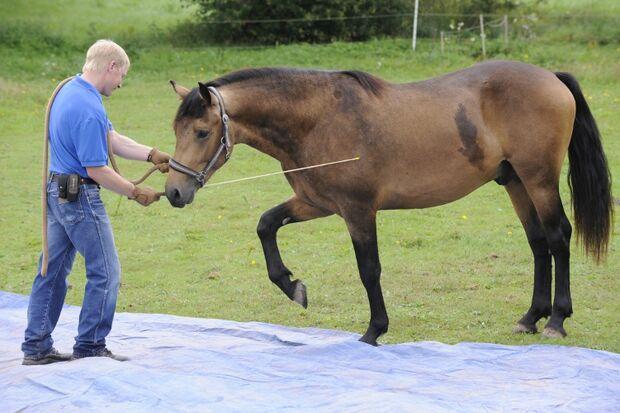 CAV Wasser Wasser-Training Stefan Valentin Horsemanship_07