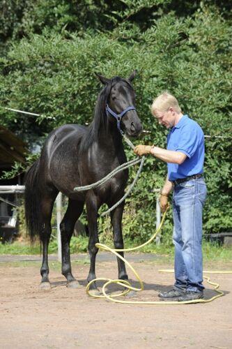 CAV Wasser Wasser-Training Stefan Valentin Horsemanship_10