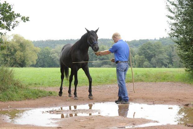 CAV Wasser Wasser-Training Stefan Valentin Horsemanship_14