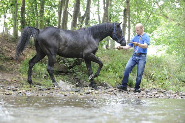 CAV Wasser Wasser-Training Stefan Valentin Horsemanship_17