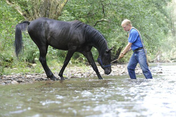 CAV Wasser Wasser-Training Stefan Valentin Horsemanship_18