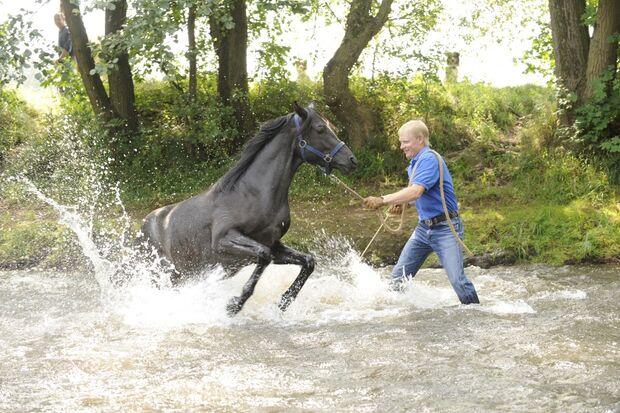 CAV Wasser Wasser-Training Stefan Valentin Horsemanship_19