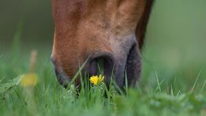 CAV Weide Koppel Gras
