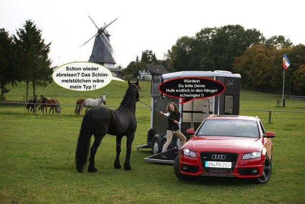 CAV Wenn Pferde sprechen könnten MS _02
