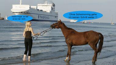 CAV Wenn Pferde sprechen könnten MS _03