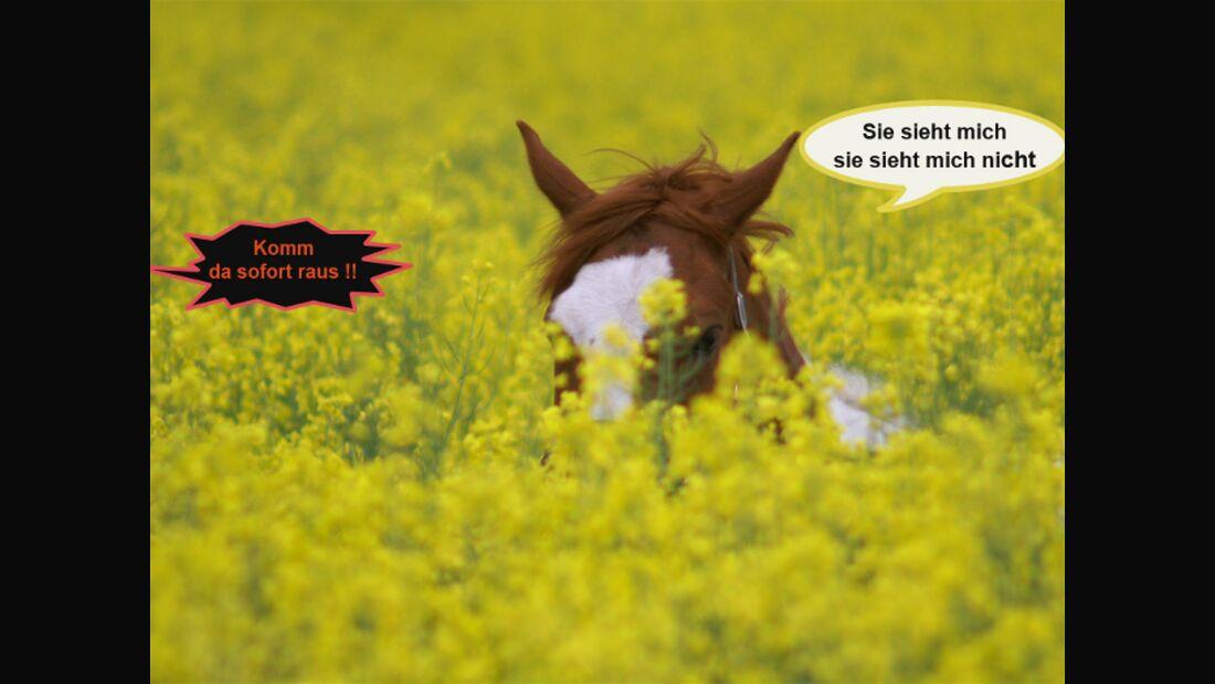 CAV Wenn Pferde sprechen könnten MS _10