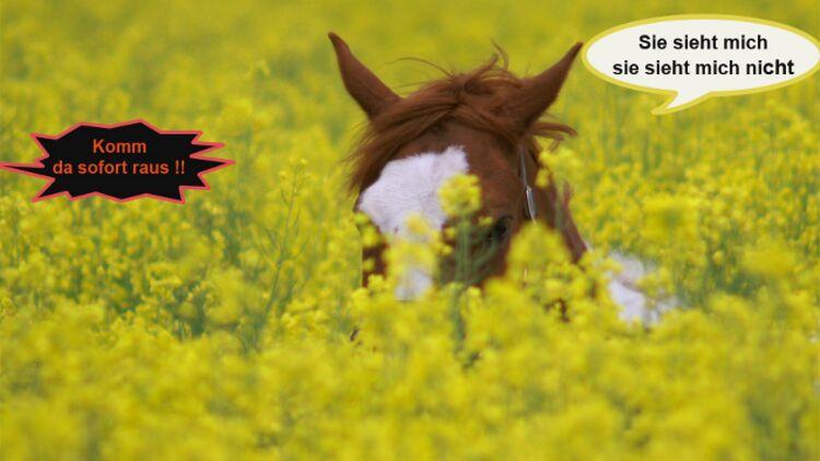 Wie Würden Sie Diese Pferde Einschätzen Cavallode