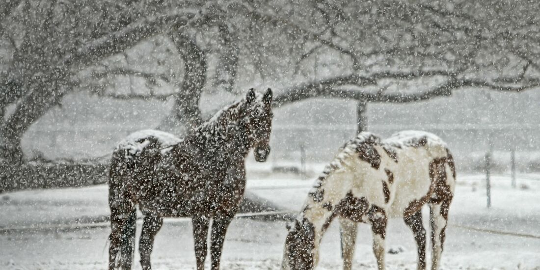 CAV Winter Pferde Koppel Schnee