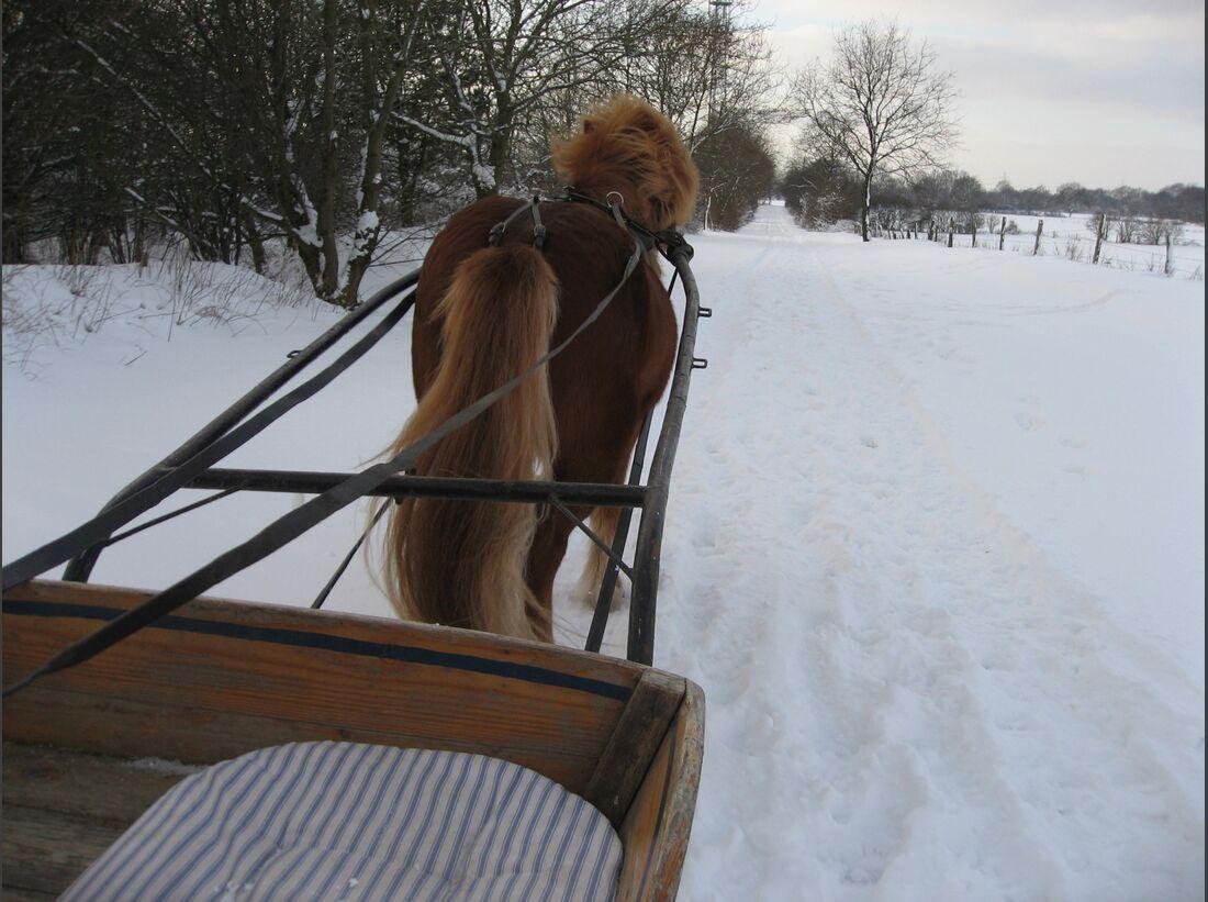 CAV Winter Pferdeschlitten Isländer