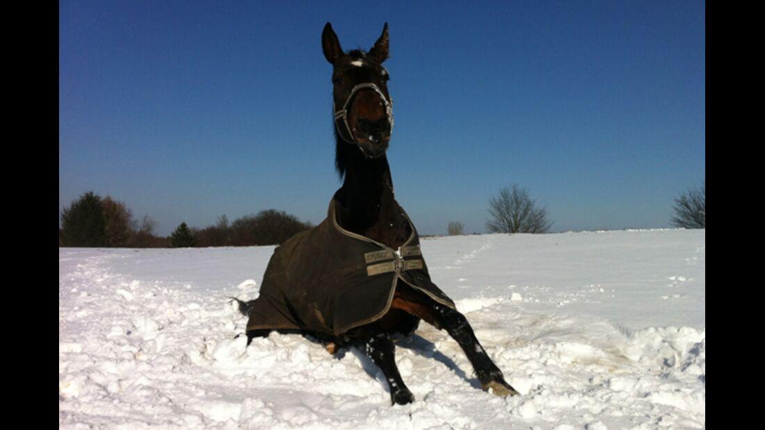 CAV Winter Schnee 3