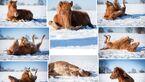 CAV Winterfotos Fohlen Wälzen Christina Bischoff