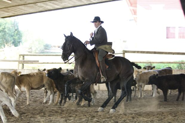 CAV Working Equitation