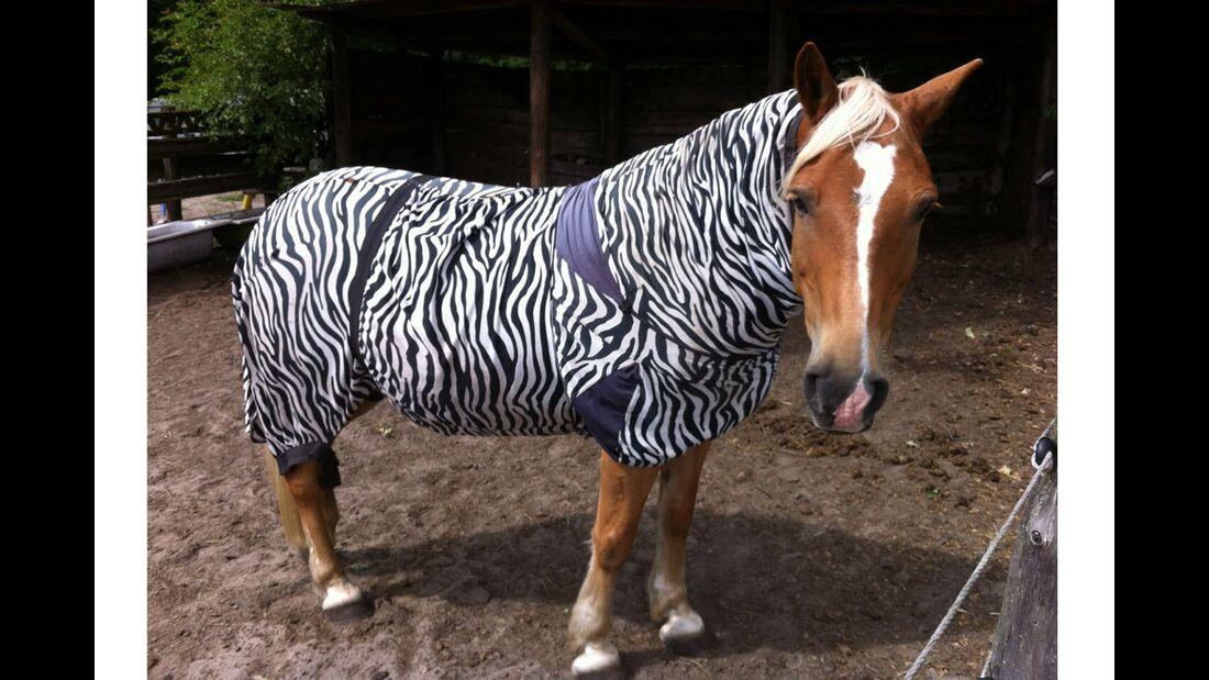 CAV Zebra Bremsen Leserfotos Susanne Gahr