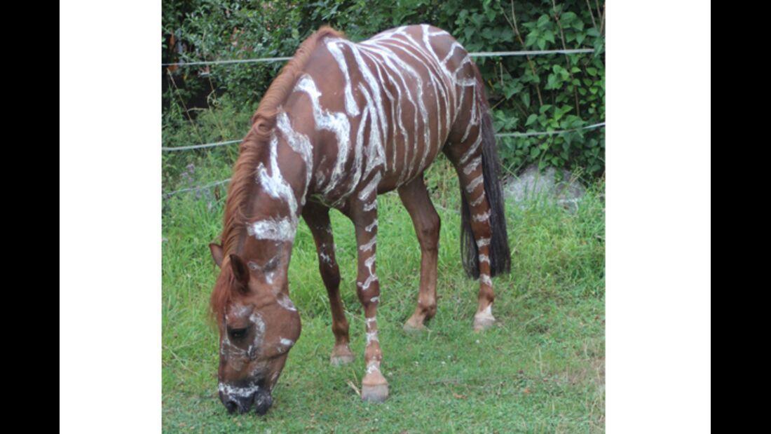 CAV Zebra Leserfotos 5