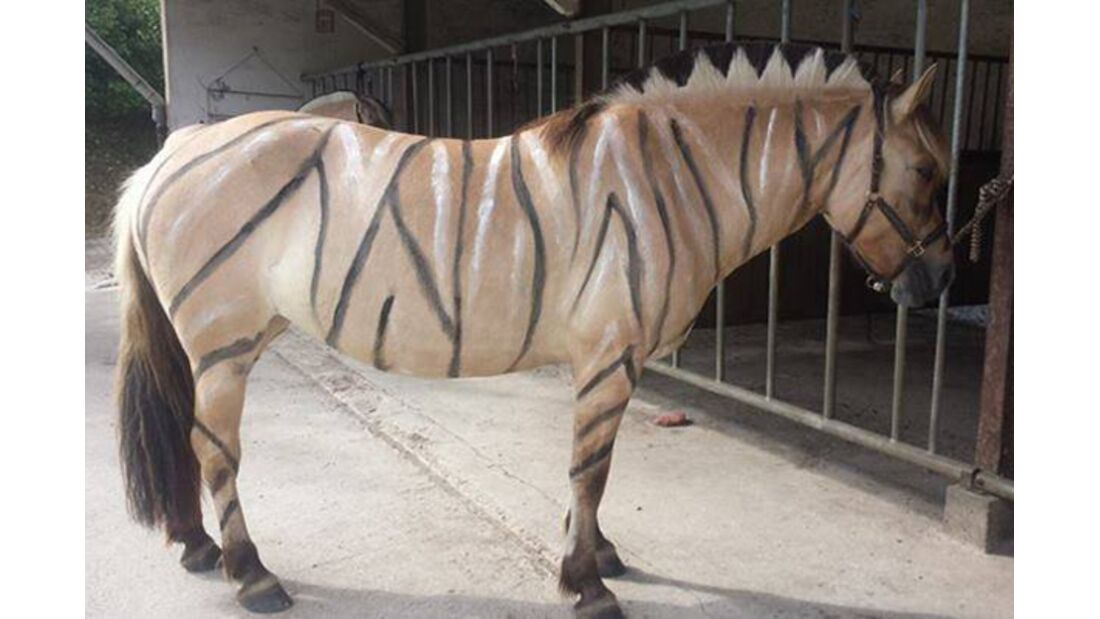 CAV Zebra Leserfotos 9