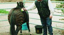 CAV Zebra Zesel  Rasse