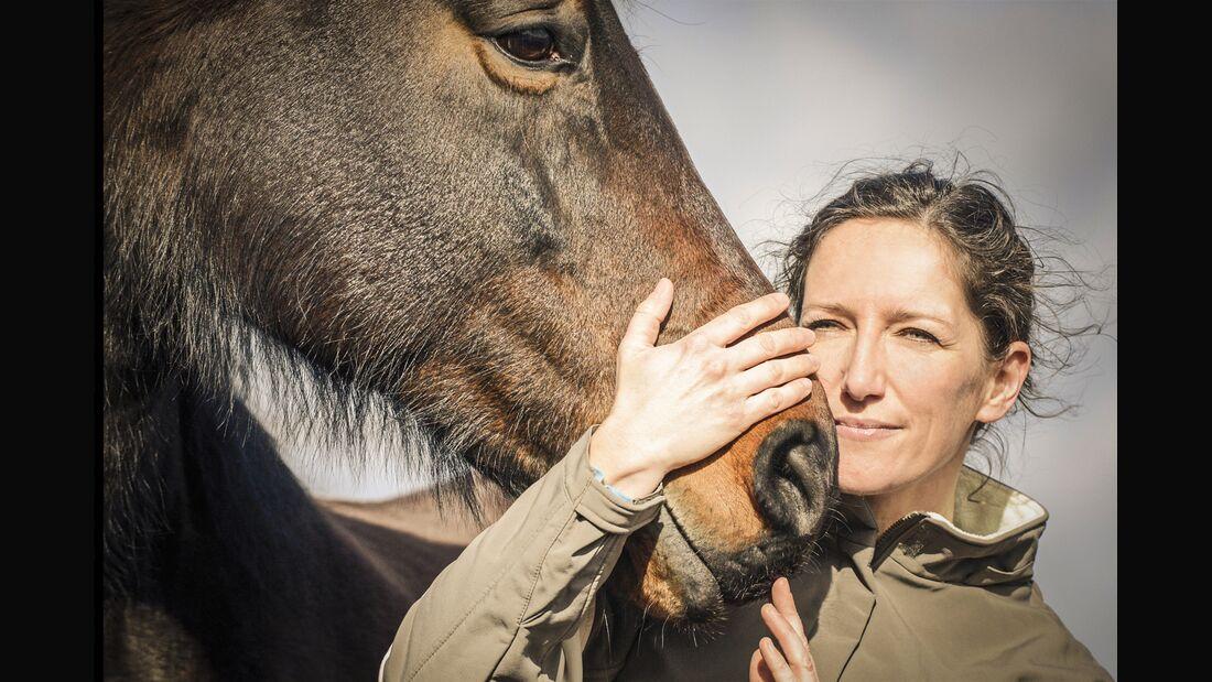 CAV Zoonosen Pferdekrankheiten ansteckend Teaser