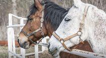CAV Zwei Pferde Paddock