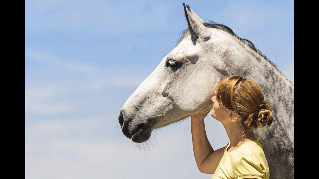 CAV alte Pferde Caprice jung