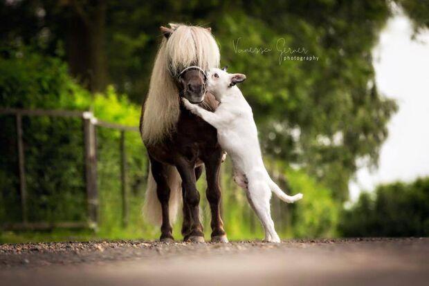 CAV tierisch gute Fotos Vanessa Gerner Photography