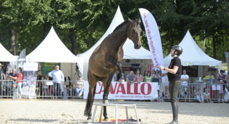CAVALLO Academy 2015 - Anja Rudolf Video