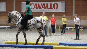CAVALLO Academy 2015 Equikinetic