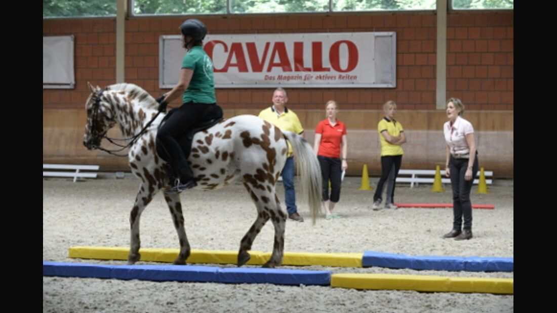 CAVALLO Academy 2015 - Equikinetic Video