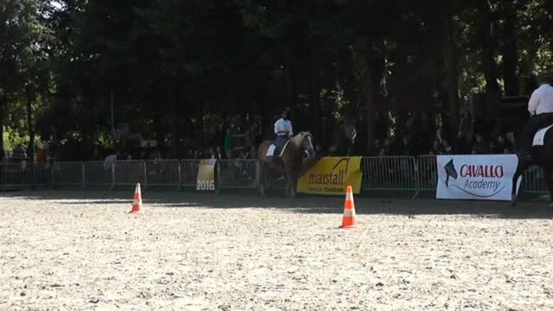 CAVALLO Academy – Ralf Heil BR Video