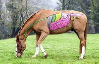 CAVALLO Anatomie des Pferds