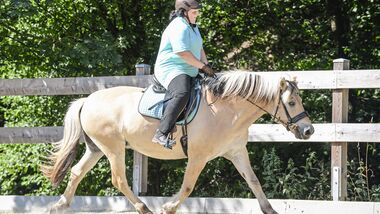 """CAVALLO-Coach """"Mein Pferd fällt im Galopp immer aus"""""""