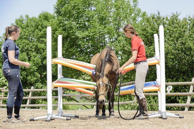 CAVALLO Spielt mein Pferd gerne?